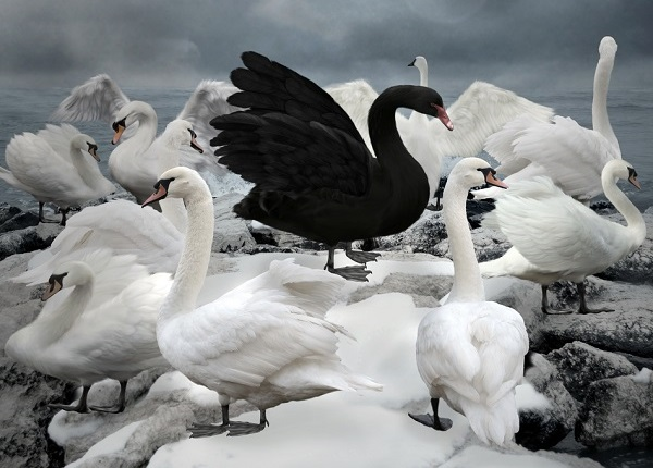 homeowners-how-many-more-black-swans