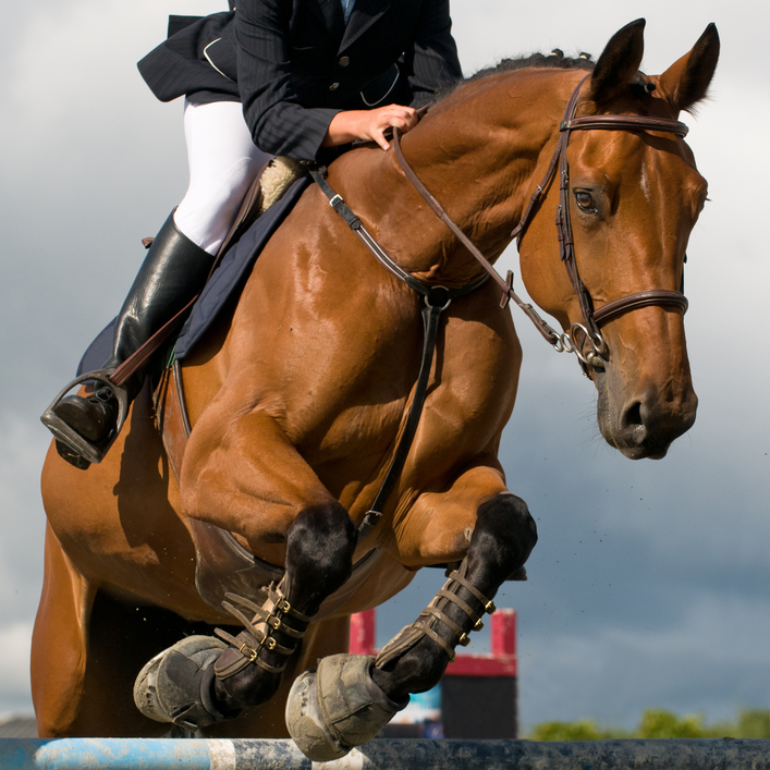the-olympics-for-horses-are-your-clients-covered-