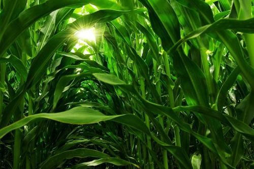 fy2021-budget-calls-for-deep-cuts-to-crop-insurance-program