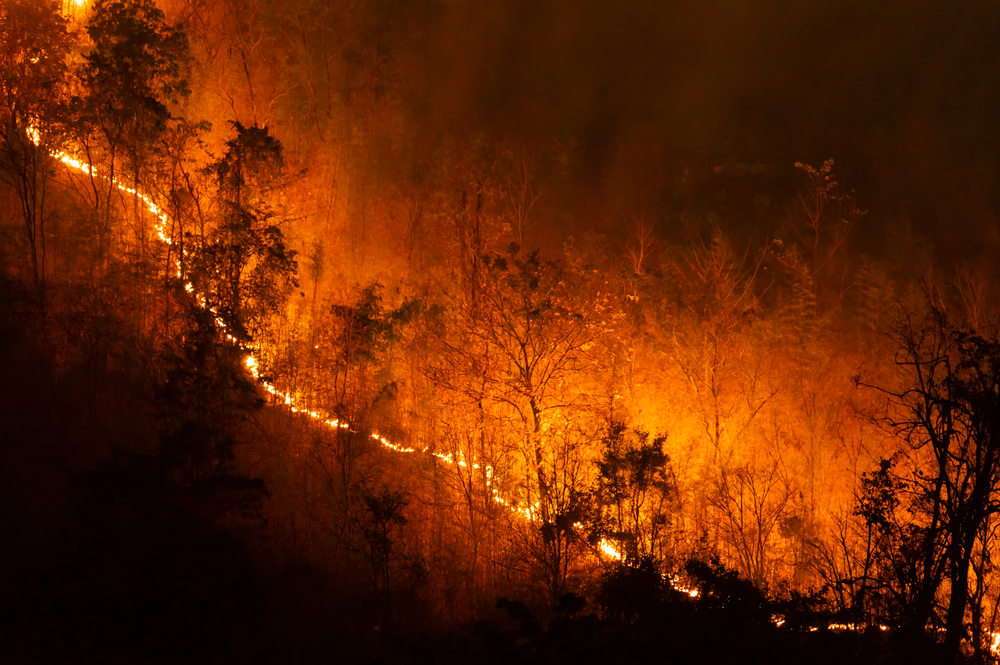 How Agents Can Help Clients Mitigate Wildfire Risk