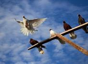 Carrier Pigeons: Make Your Agency Marketing Stand Out with E-Newsletters