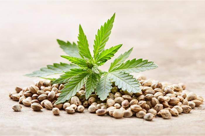 4 things to consider before entering the cannabis market