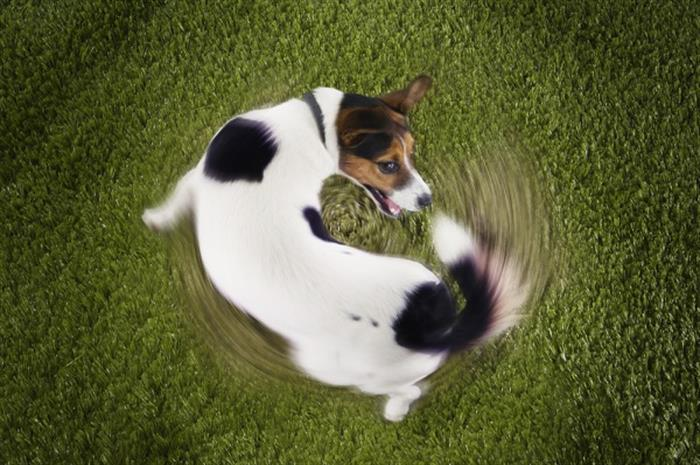 in-product-liability-is-the-tail-wagging-the-dog
