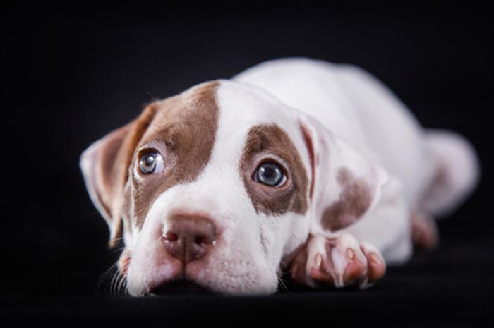 why-does-homeowners-insurance-exclude-certain-dog-breeds