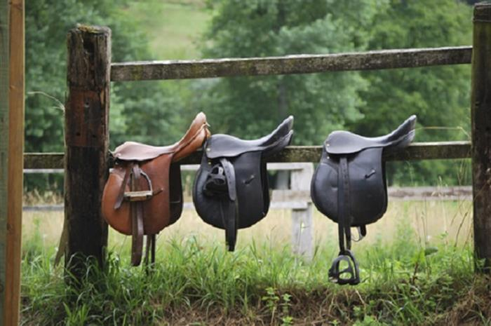 training-hour-4-tips-for-building-your-equine-book