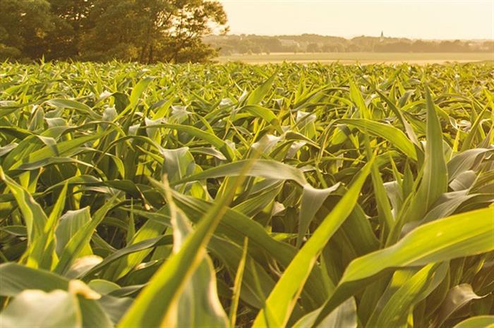 heart-and-soil-where-crop-insurance-meets-national-security