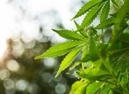 Cannabis Legislation Introduced in Congress