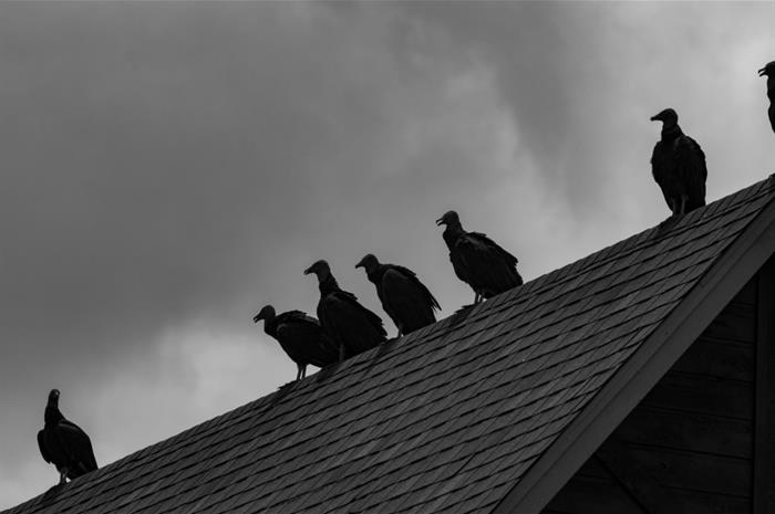 is there homeowners coverage for roof damage caused by a protected species?