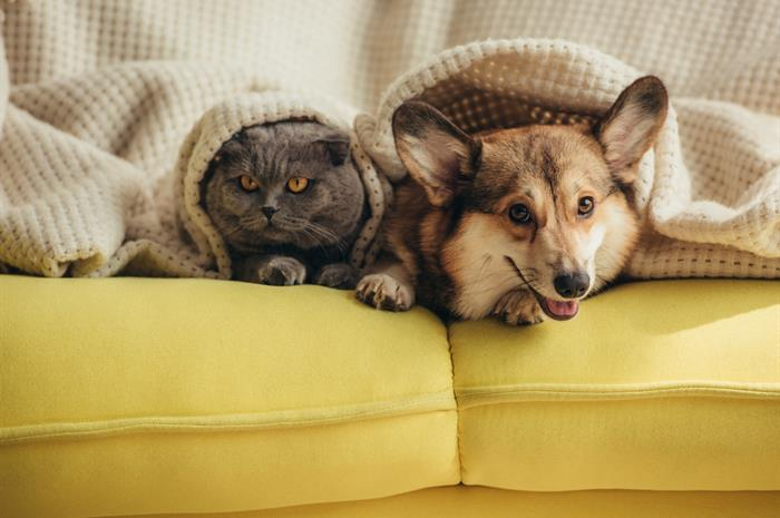 are pets covered under a homeowners policy?
