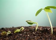 Growing Through Account Rounding: Why Is It So Hard?